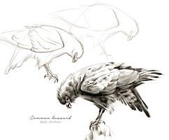 #Draw30Animals 11: Wings - Common buzzard