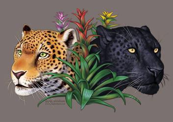 #Draw30Animals 14: Colorful - Jaguars