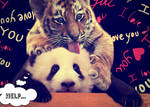 Panda and Tiger: Twazy Love (RDEW)