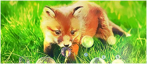 baby_fox_tag_by_dragonzekrom-d6xji0z.png