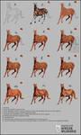 Step By Step Wildhorse