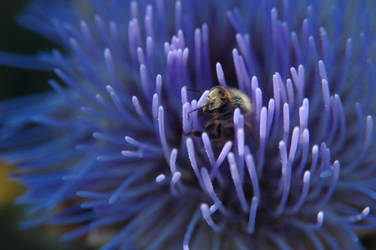 Bee in Artichoke by Baffler