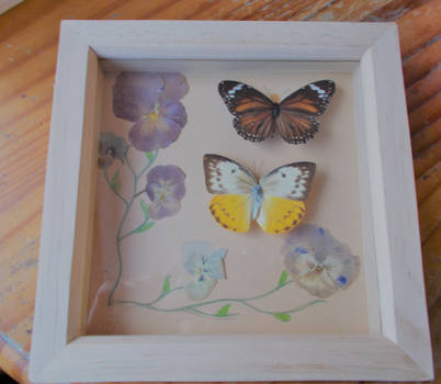 Victorian style pressed flower and butterfly frame by Joweasel