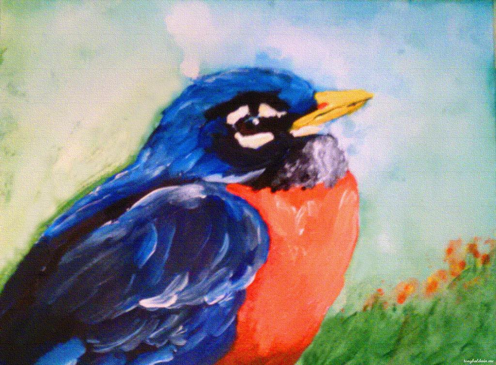 Spring Robin by abaldwin