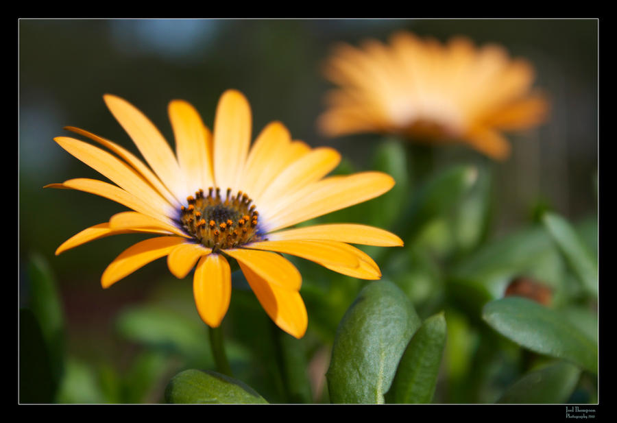 Florange by joelht74