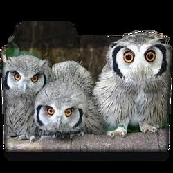 Owls Folder Icon