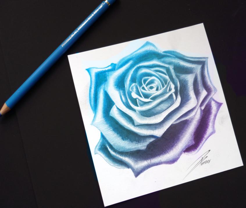Blue Rose Sketch Blue rose by davepinsker Comb Sketch