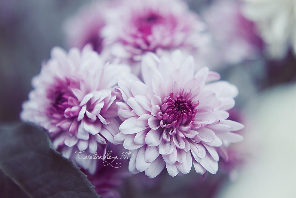 Purple by youarelightinthedark