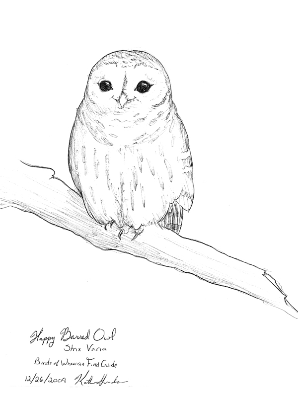 It is an image of Adorable Barred Owl Drawing