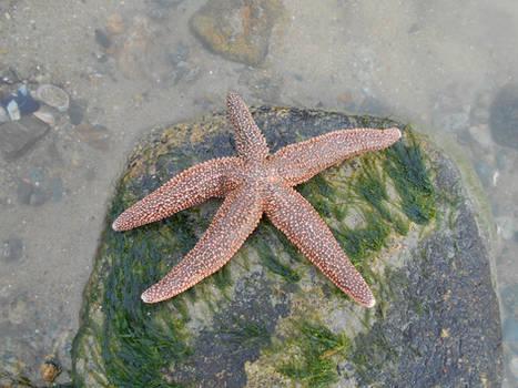 Starfish 2021