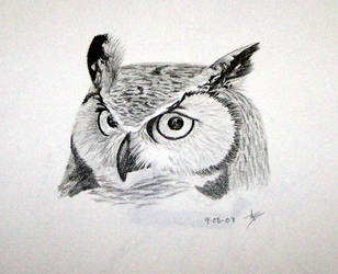 Great Horned Owl by SparklersOasis
