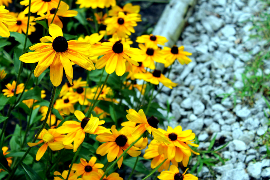 Yellow flowers by texas toes on deviantart yellow flowers by texas toes mightylinksfo