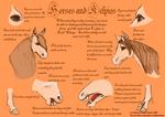 Kelpie Horse Comparison