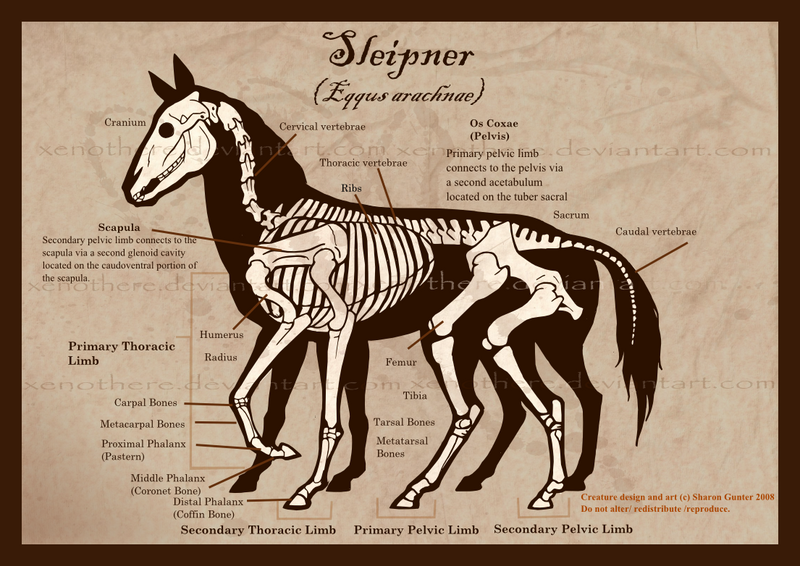 Sleipnir Skeleton Picture Sleipnir Skeleton Image