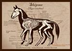 Sleipnir Skeleton