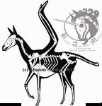Pegasus Skeletal 2011