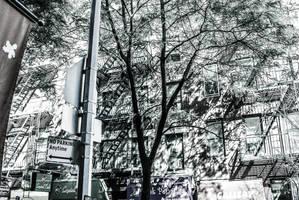 City Street by PJM74