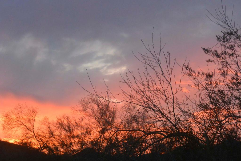 Scenic, Phoenix by PJM74