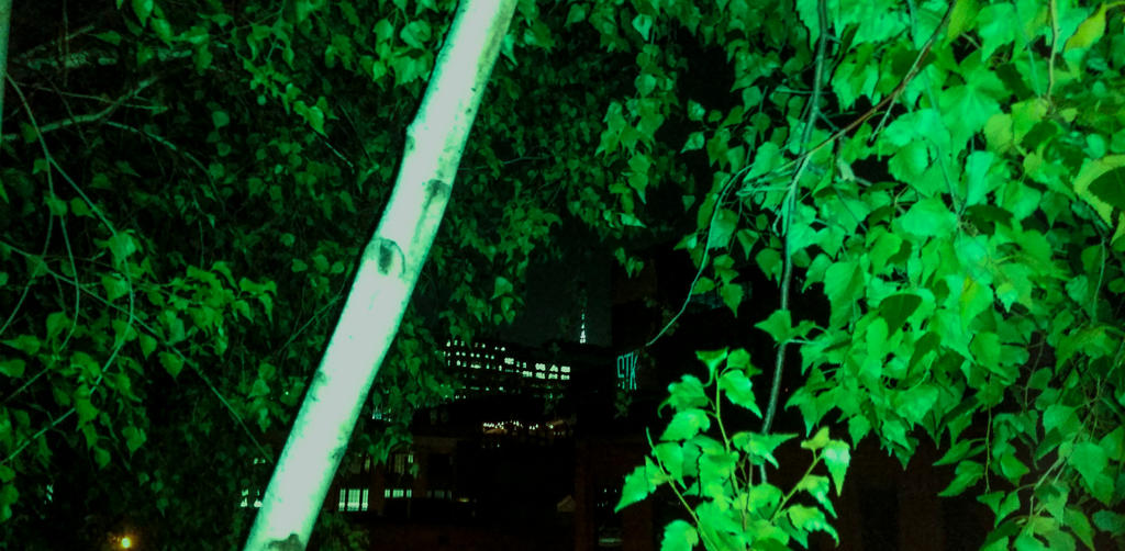 Urban Nature by PJM74