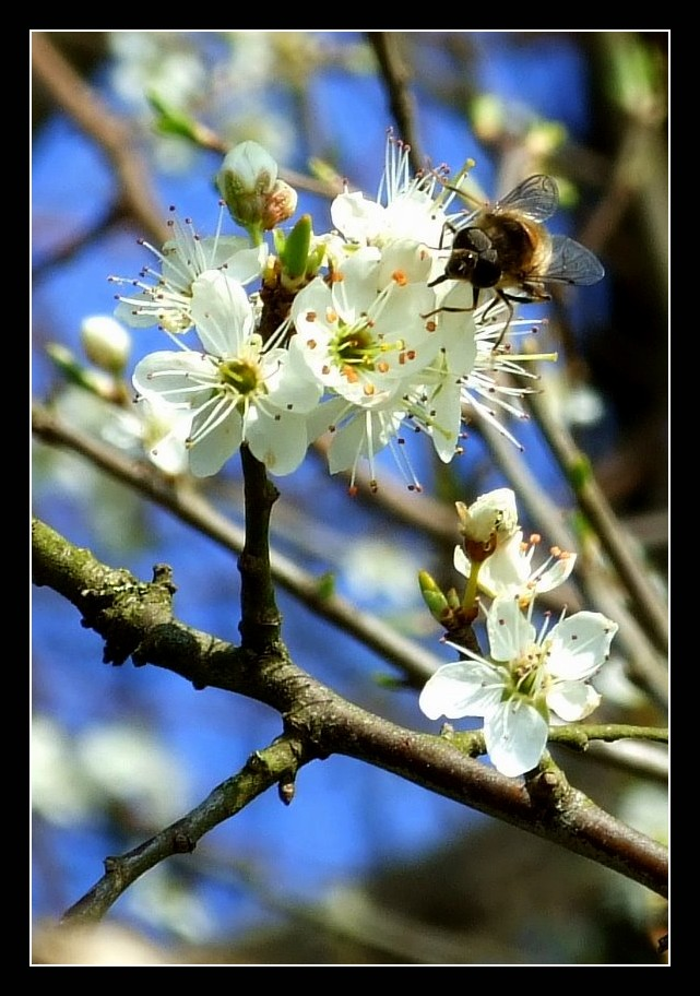 Nectar by Hocusfocus55