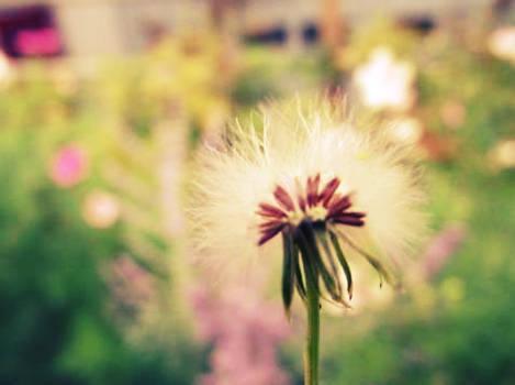 make a tiny wish...