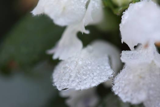 drops.of.snow