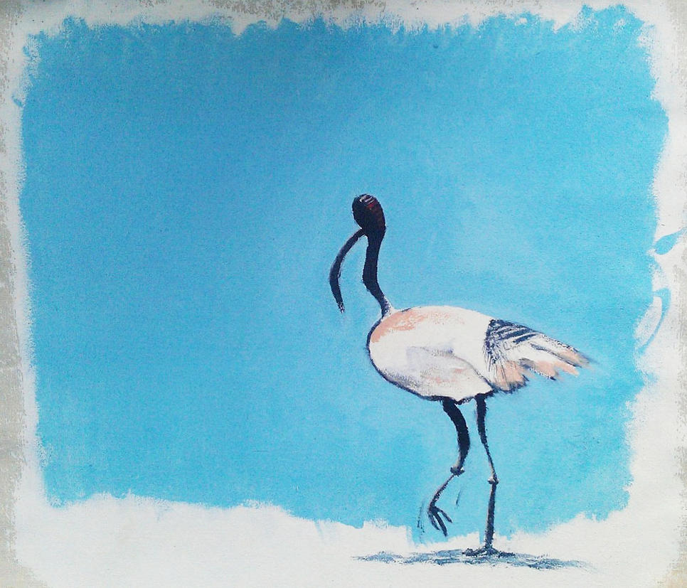 Ibis painting by holonick