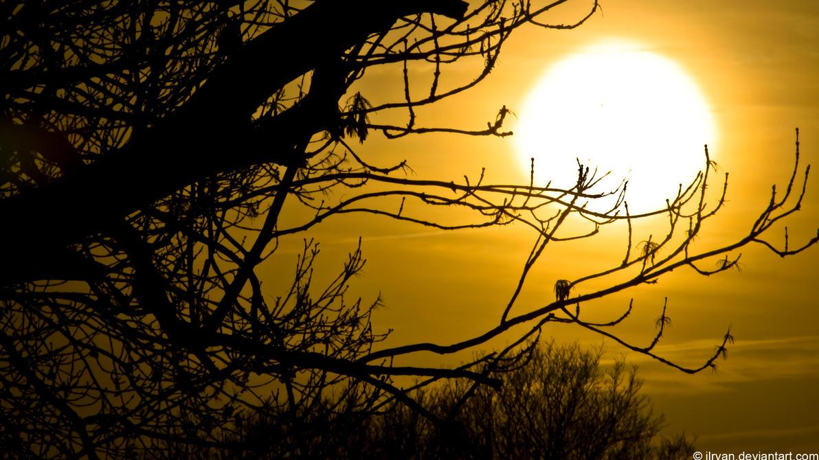 sunset_silhouette_by_jlryan-d4oslx5.jpg