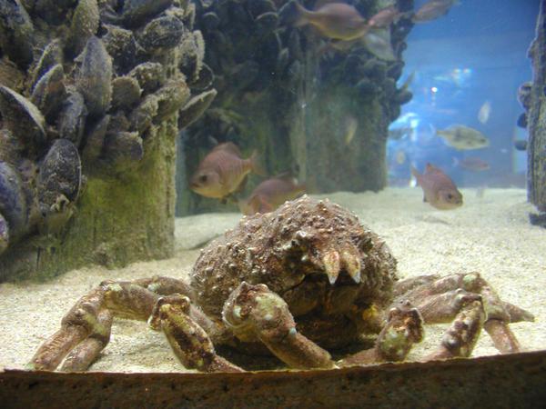 Pier 39 Aquarium Of The Bay By Diabolic Sun On Deviantart