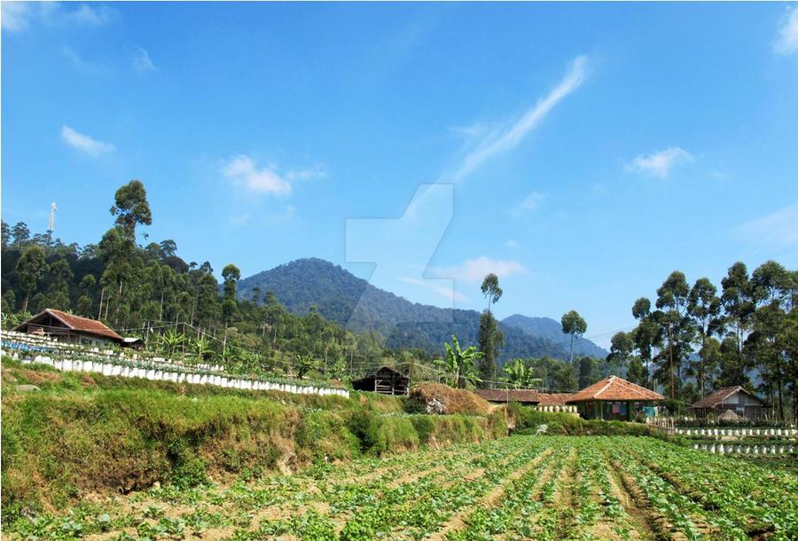 Strawberry Field by dinalovesart