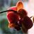 Orchid by Itazurazuki