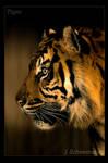 Tiger..