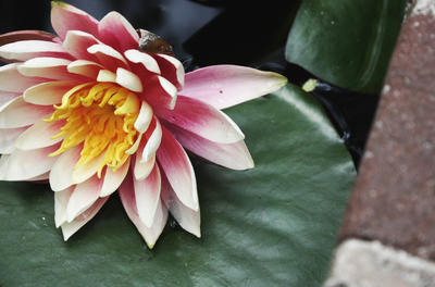 Lotus 2 by SystematicEntropy