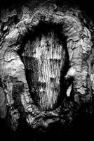 Wooden Face by Locustone