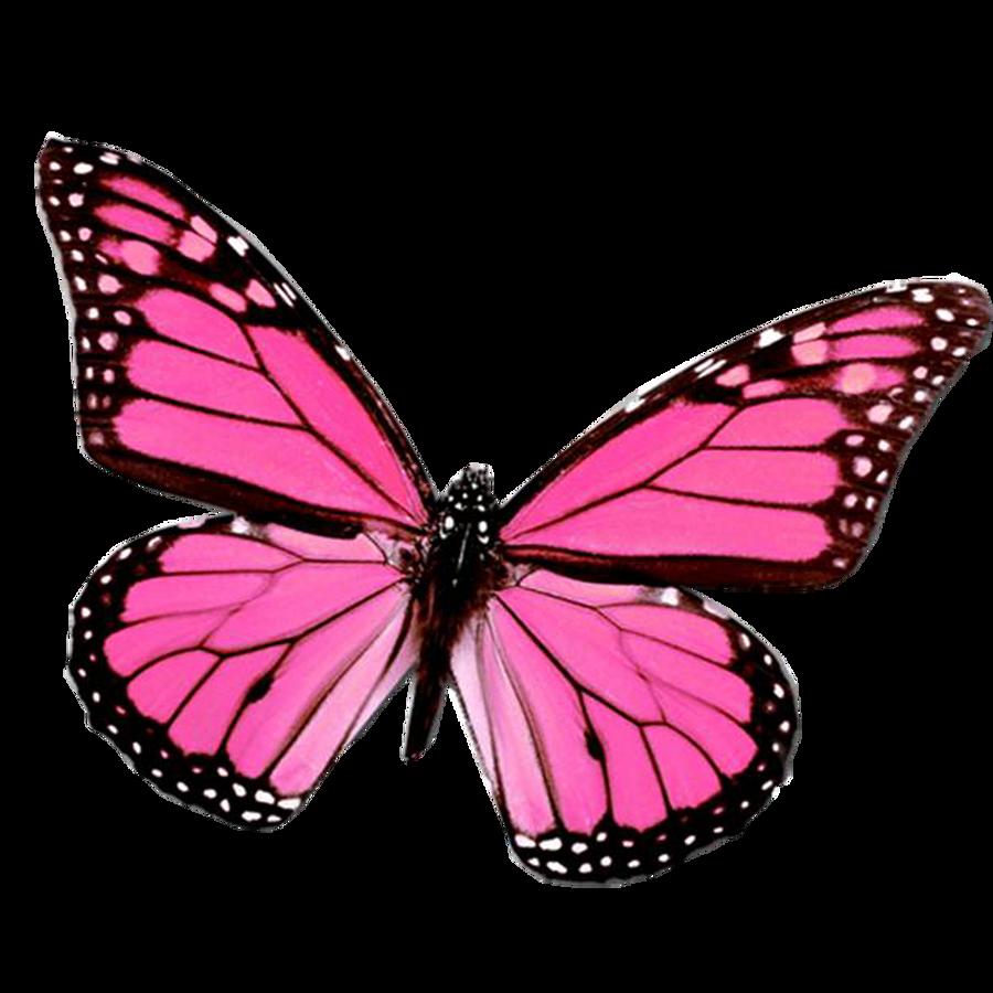 http://fc02.deviantart.net/fs70/i/2012/071/d/3/mariposa_png_by_juli_gonzalez-d4sjel6.png Pink Butterfly Graphics