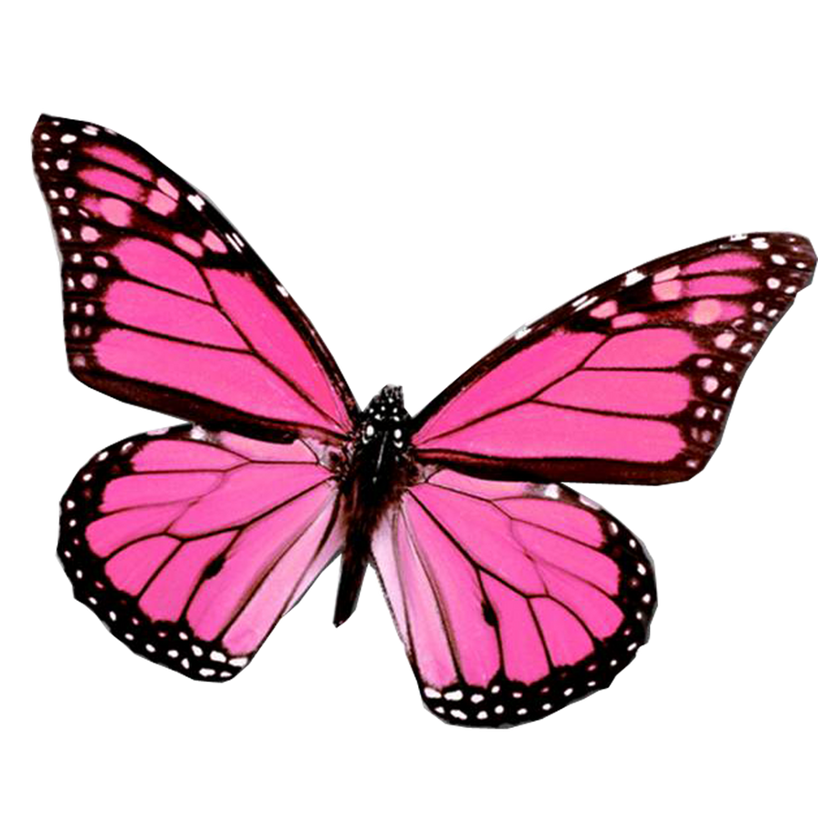 DeviantArt: More Like Mariposa PNG by Juli-Gonzalez