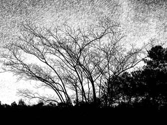 Trees n Art - Black n White by mycanda
