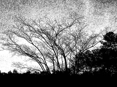 Trees n Art - Black n White