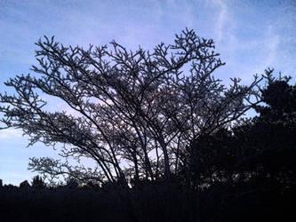 Trees n Art - Black Frost Design by mycanda