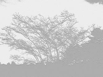 Trees n Art - White and Gray Design by mycanda