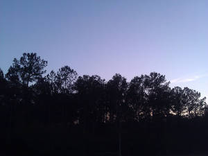 Sky n Trees