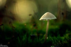 Mushroom's day