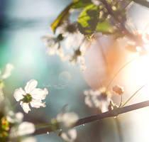 Under the sun. by andokadesbois
