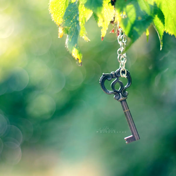 Key Of Tree. by andokadesbois