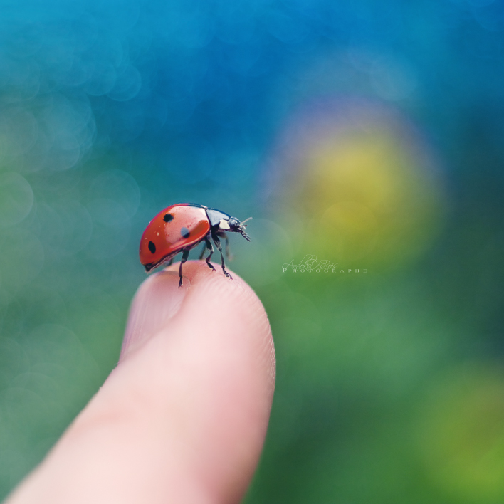 Hi Little Friend. by andokadesbois