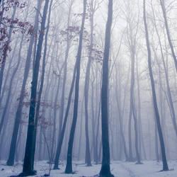 Forest Of Mist. by andokadesbois