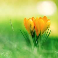 Yellow Days. by andokadesbois