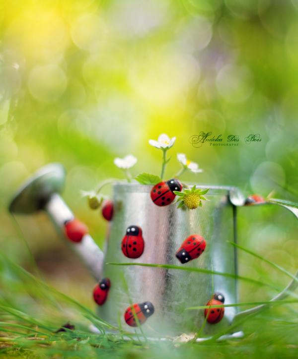 My Sweet Garden II. by andokadesbois