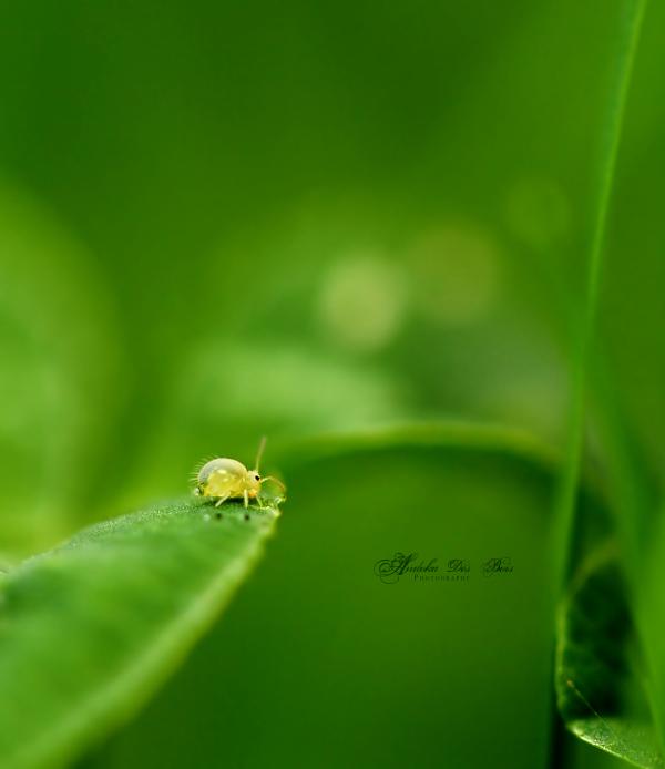 Green Sanctuary. by andokadesbois