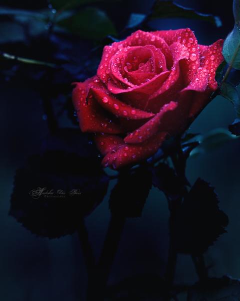 From My Dark Heart. by andokadesbois